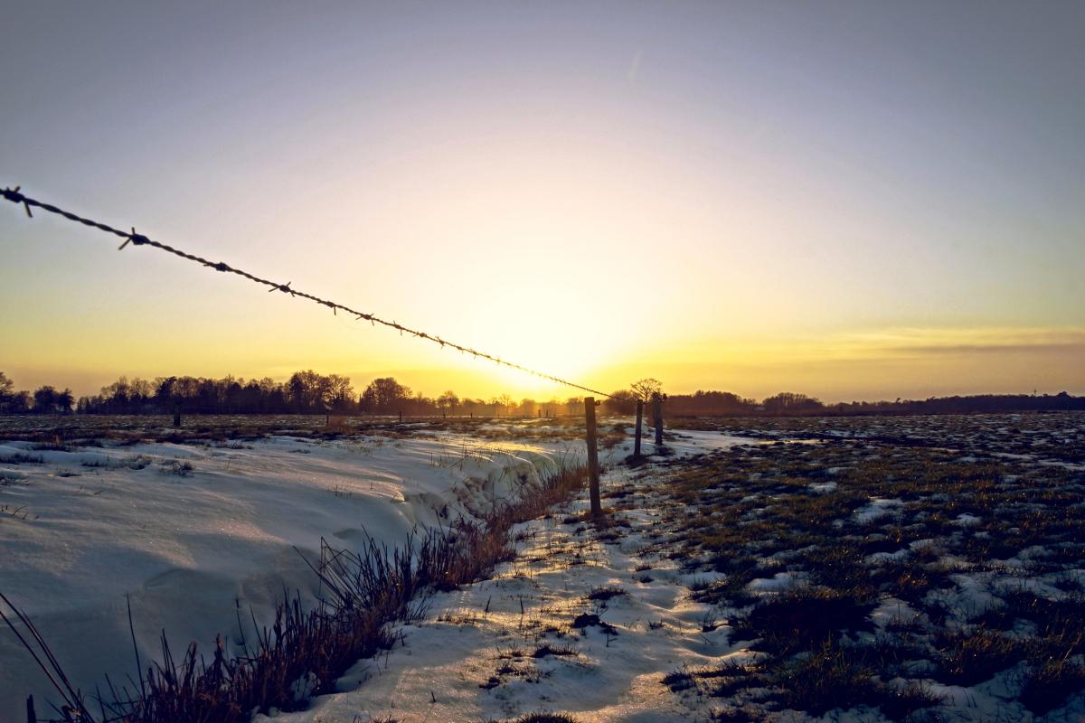 Stacheldraht in winterlichem Sonnenuntergang