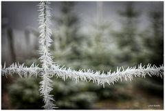 Stacheln aus Eis