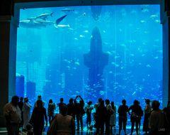 Stadt der Aquarien