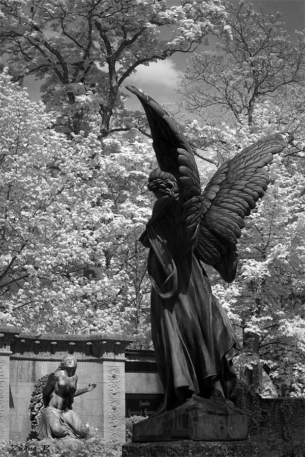 ~ stadt der engel - IR ~