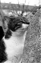 Stadt-Katze