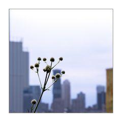 Stadt*Ansichten