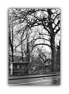 Stadtbäume 18.........