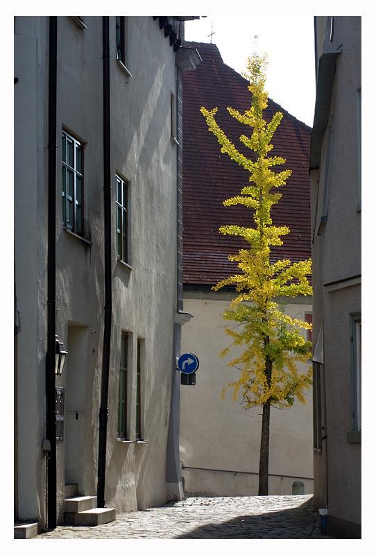 Stadtbaum