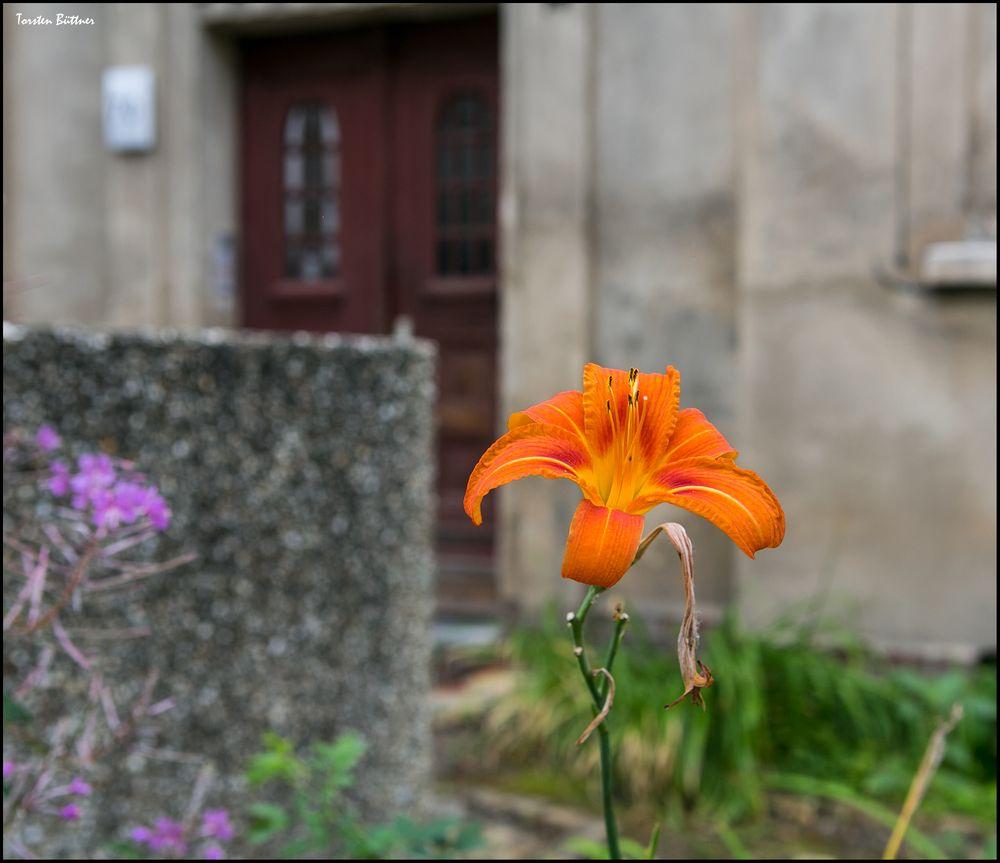 Stadtblümchen