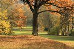 Stadtpark Plauen im Herbst