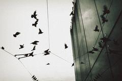STADT.vögel.