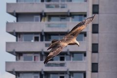 Stadtvogel ...