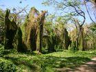 Stadtwald von Havanna