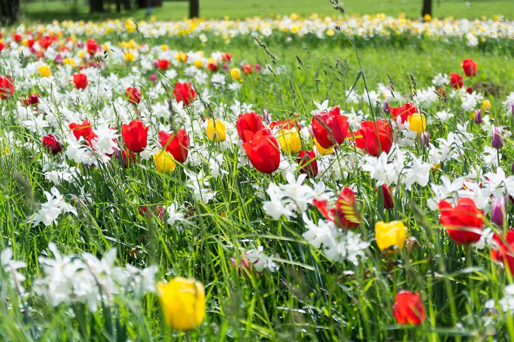 städtischer Blumenschmuck