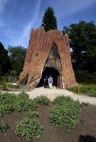 Stamm Riesen-Mammut-Baum
