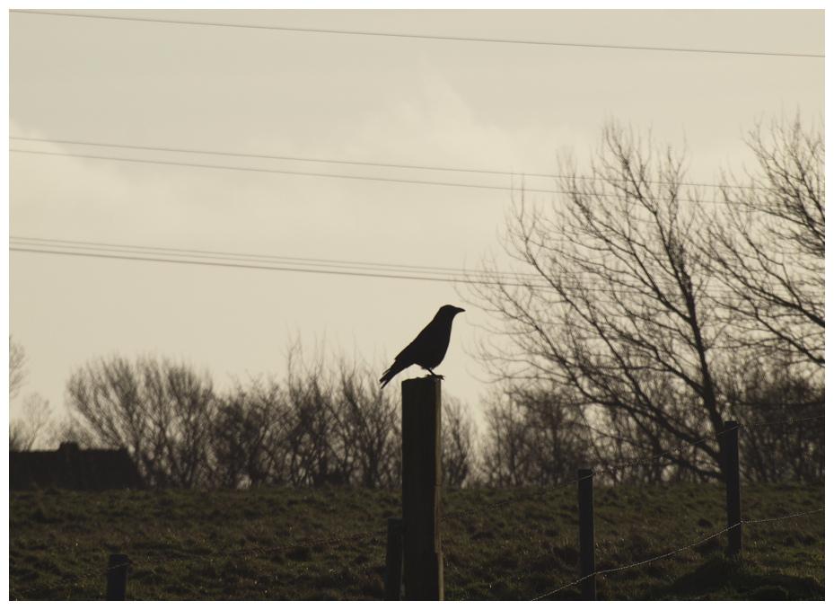 Standpunkte machen oft einsam. ..