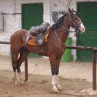 ) star a horse (