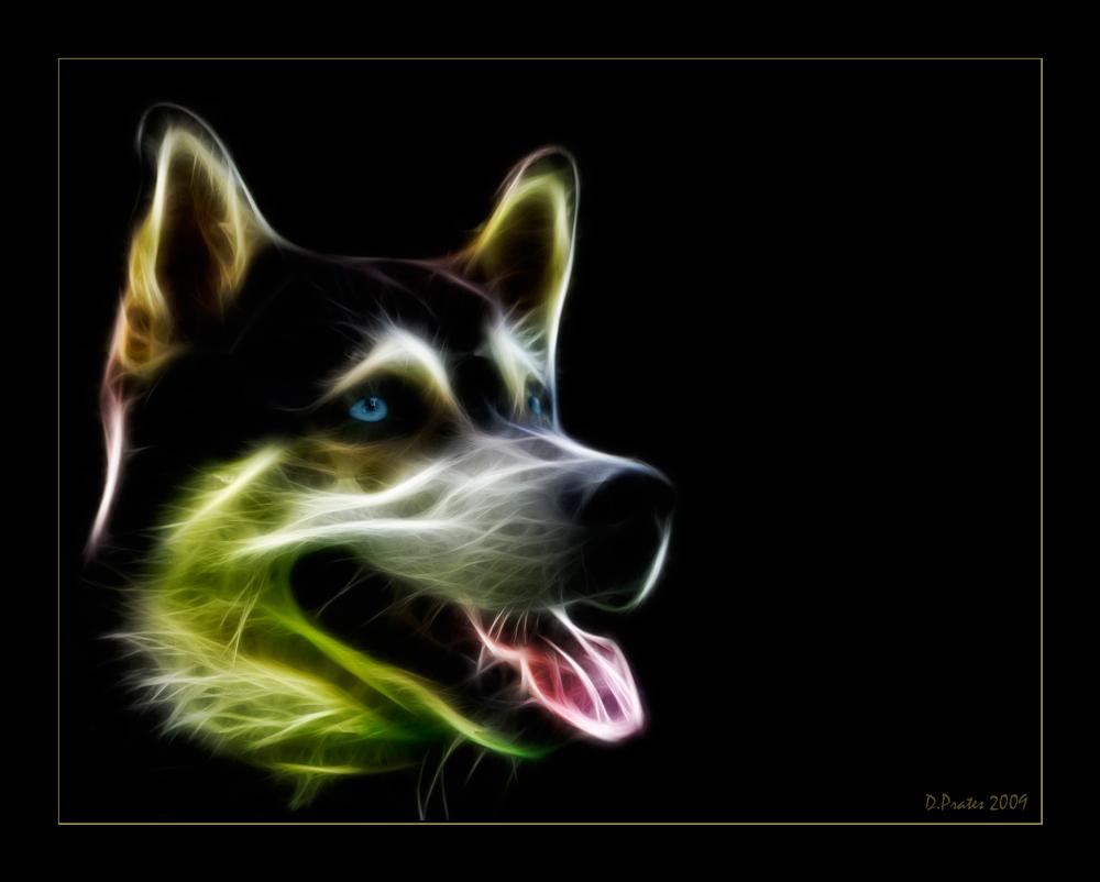 - Star Husky -
