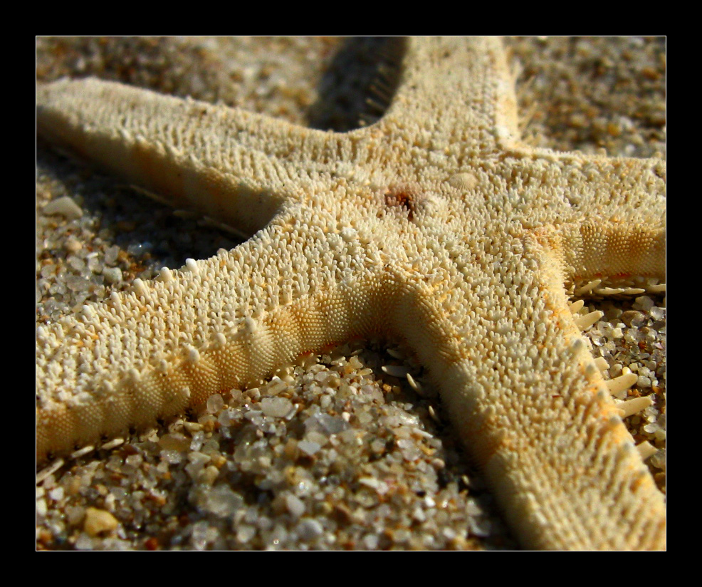 starfish detail