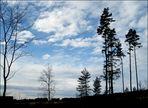 Starke Bäume ......