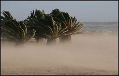 starker Wind