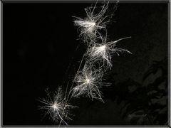 """""""starlights im Netz gefangen"""""""