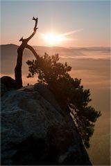 Stativbaum sunrise...