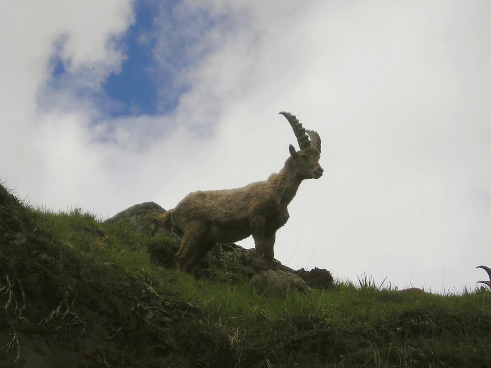 statue ou animal figé?