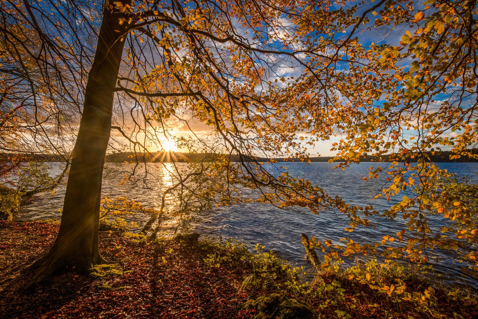 Stechliner Herbst