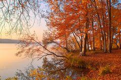 Stechlinsee im Herbst