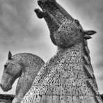Steel  Ahead    --   The Kelpies   ©D4738_IPBW-F2h
