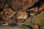 Stefan und seine Mäuse (1)