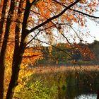 Steg am Teich