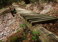 Steg im Wald