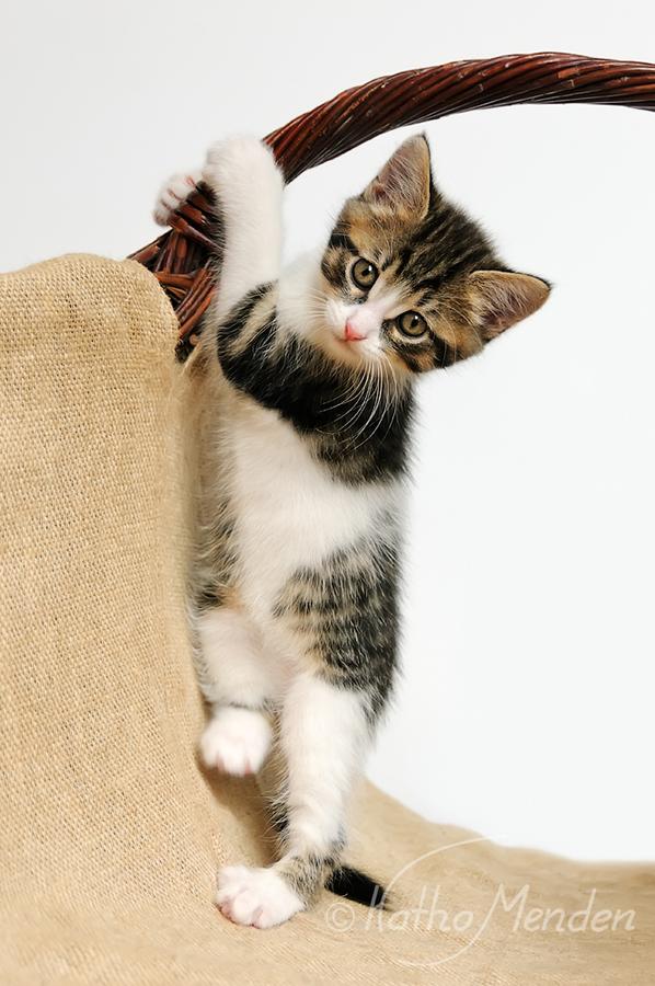 Stehauf-Kätzchen