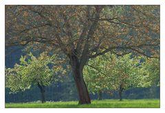 Steigerwälder Frühling (II)