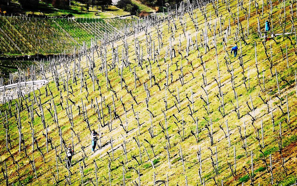 STEIL-Lage Wein Stgt P20-20-col +2Fotos +Text