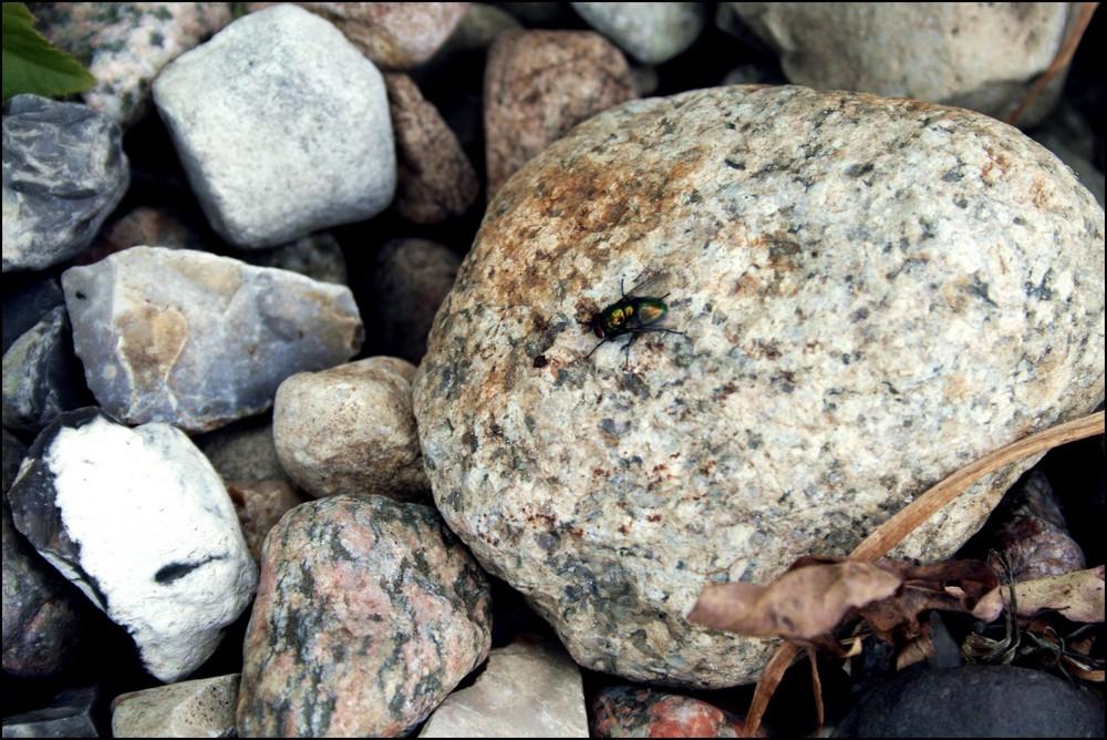 stein - fliege - stein