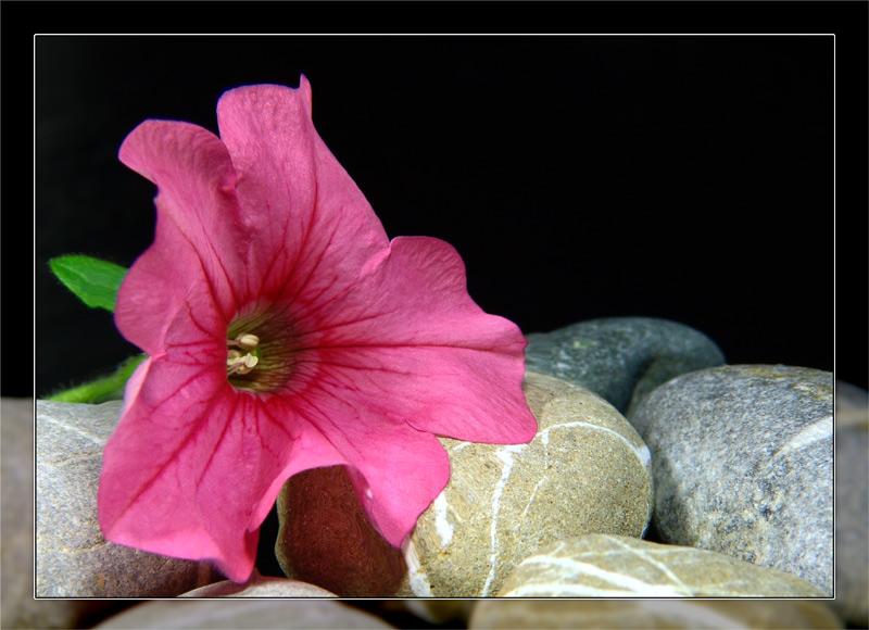 Stein und Blume