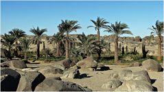 Steine und Palmen...................