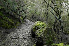 Steineichenweg