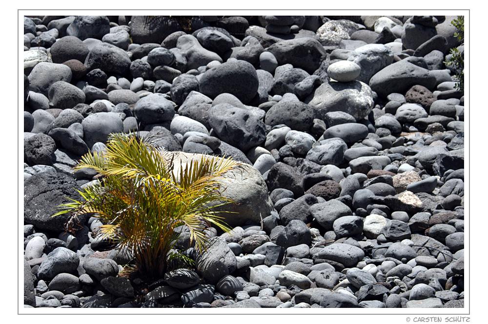Steingarten mit Palme