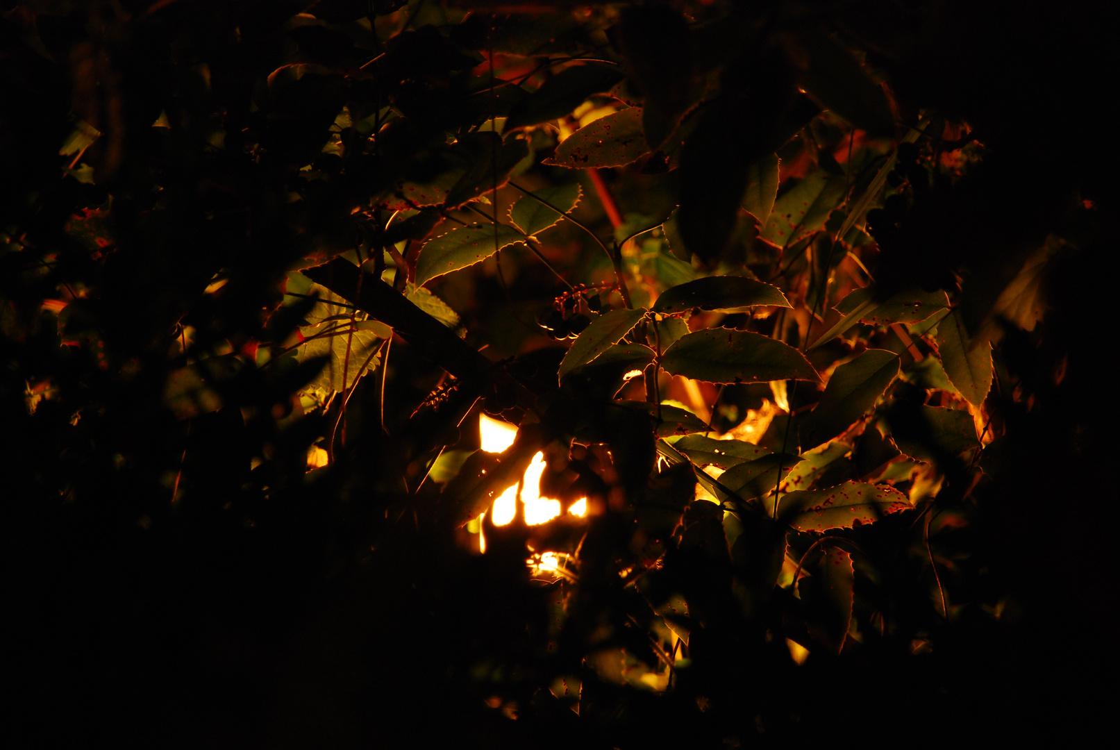 Steingarten und Planzen bei Nacht