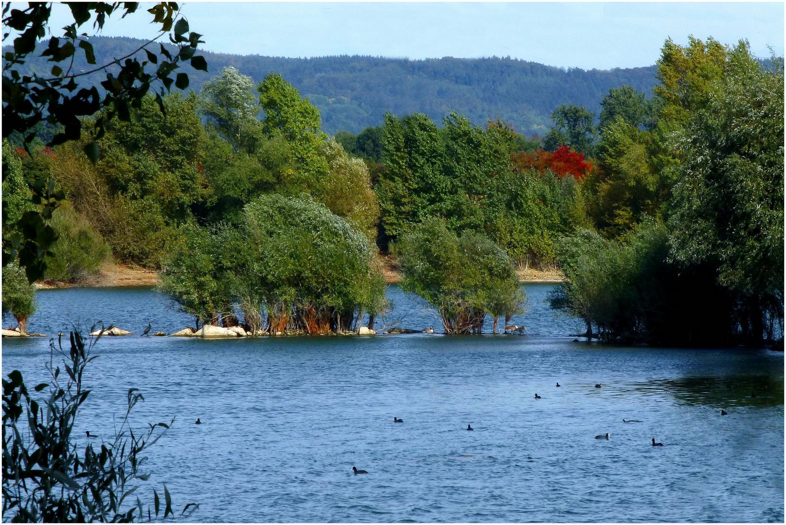 Steinsee bei Neuwied / Rhein