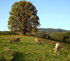 Steirische Herbstlandschaft!