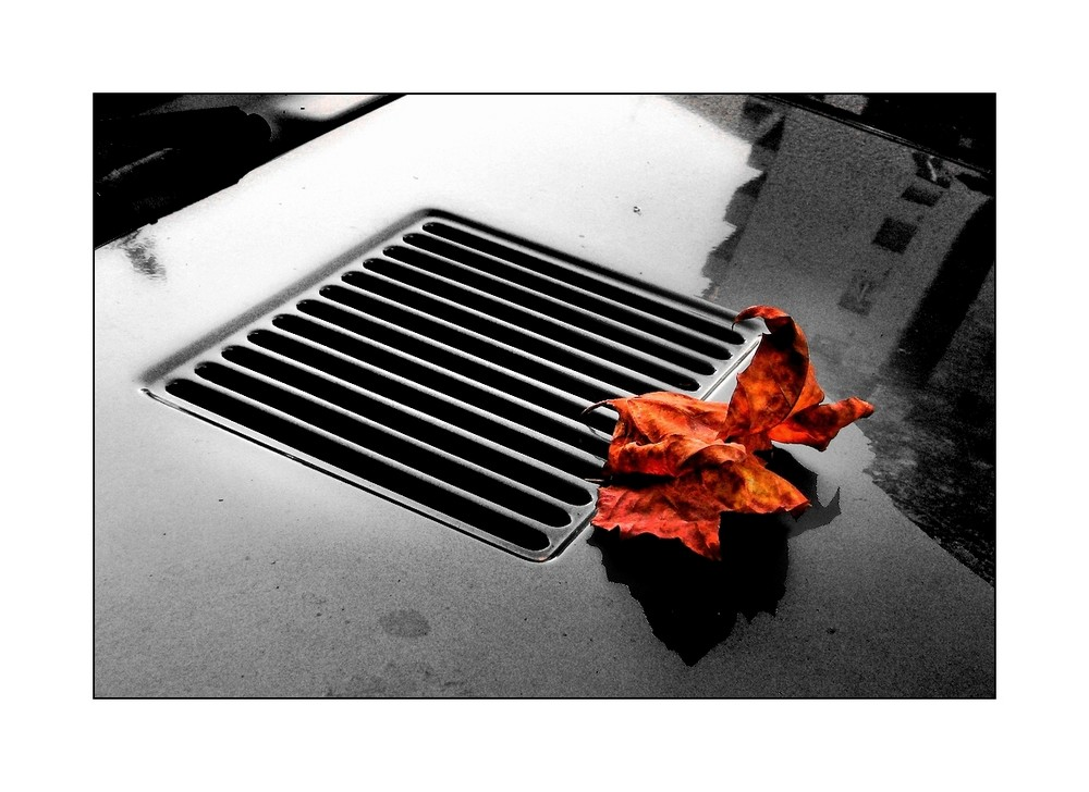 Stella d'autunno