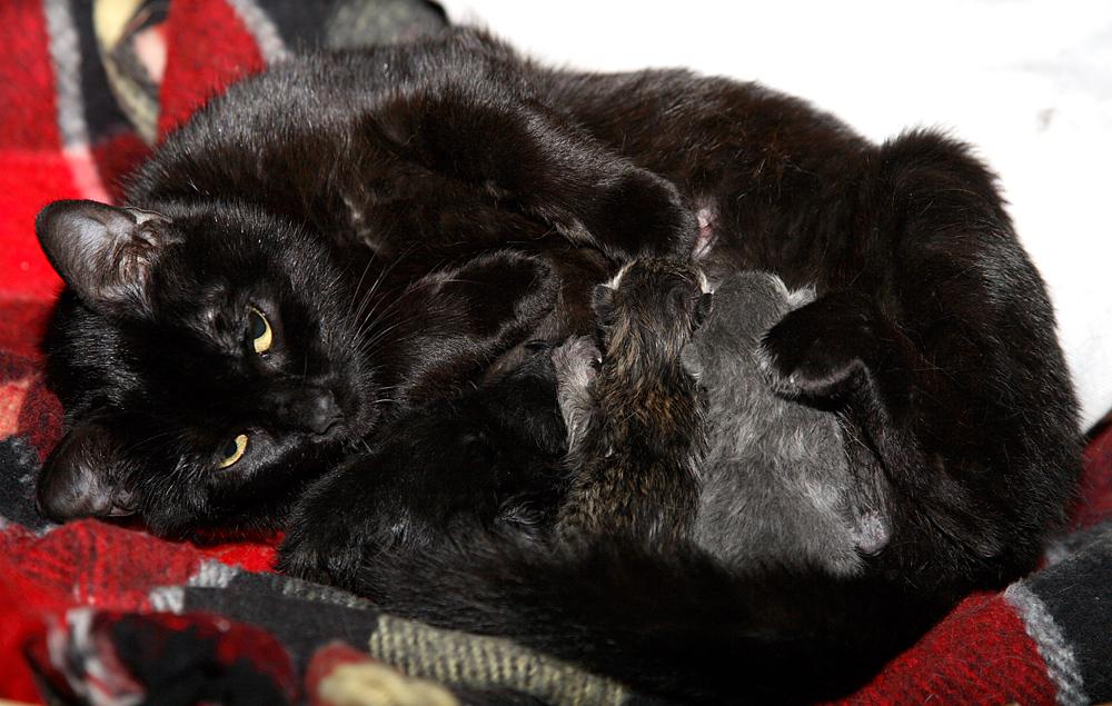 Stella e le sue stelline appena nate...
