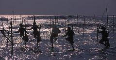 Stelzenfischer an der Westküsre