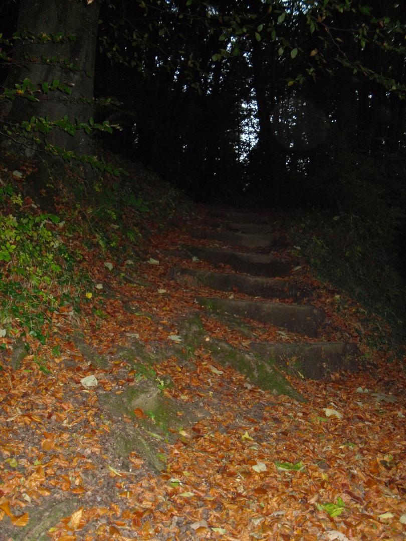 Steps into woodland