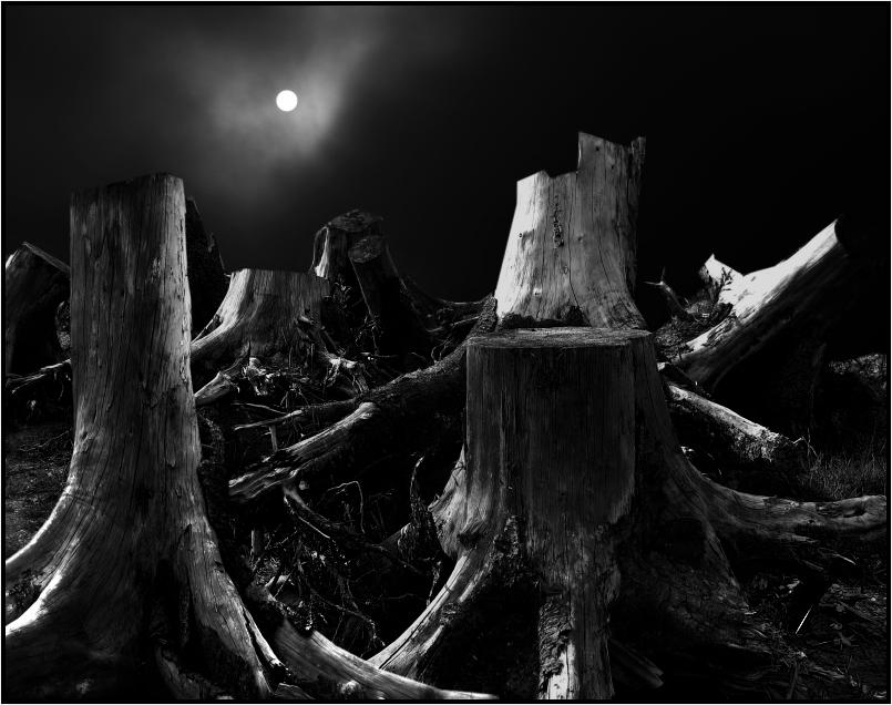 sterbende bäume...