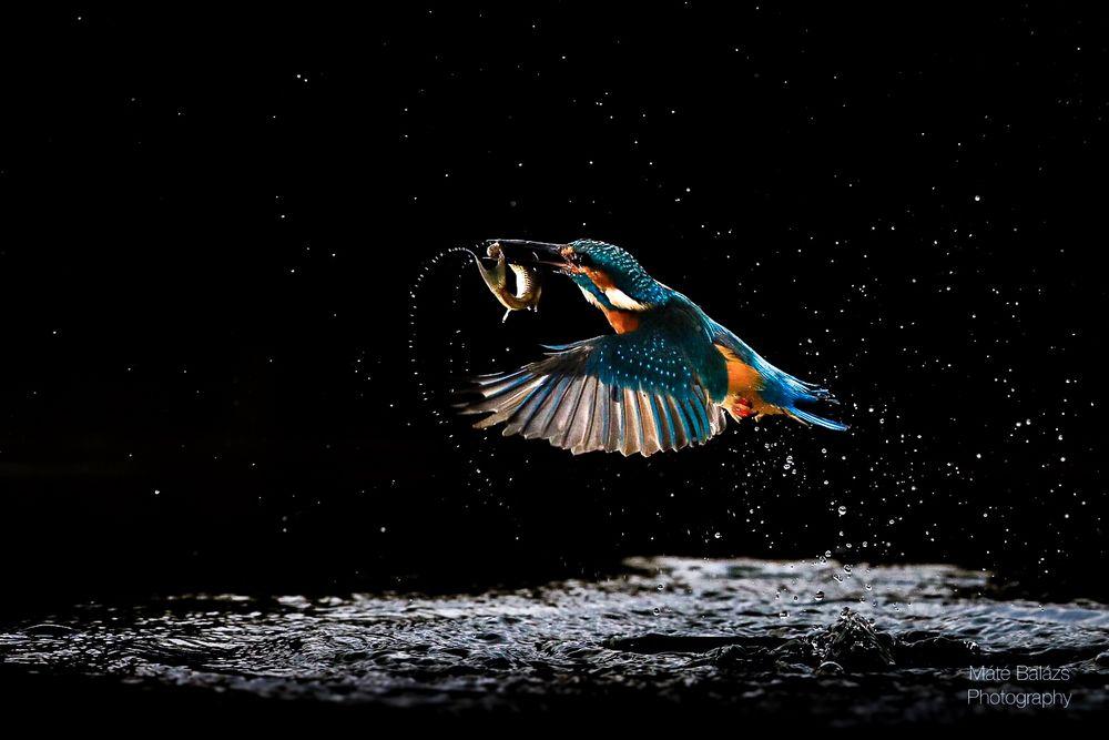 sterne foto  bild  tiere wildlife fotos bilder auf