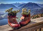 Sterne der Alpen