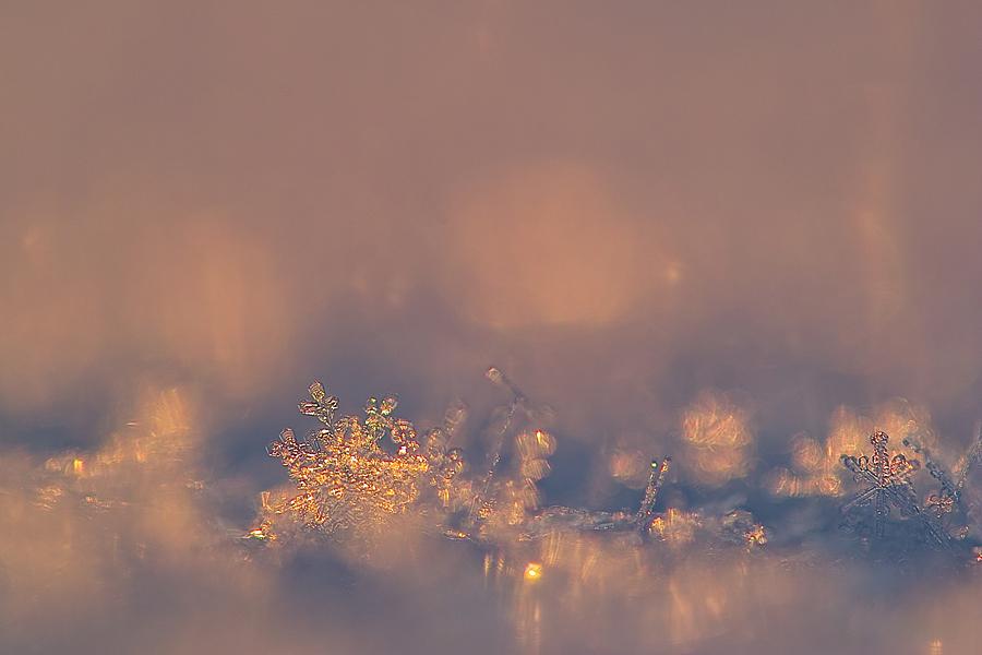 sterne die vom himmel fallen foto bild jahreszeiten winter natur bilder auf fotocommunity. Black Bedroom Furniture Sets. Home Design Ideas