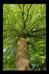 Sternen Baum